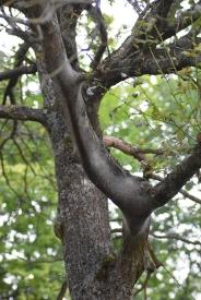 Nid sous une branche