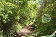 Un exemple de milieu dans lequel on peut rencontrer le Bombyx du chêne : le bord d'un chemin forestier, ici à Hières-sur-Amby (38) le 25 mai 2021.