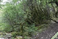 Autre exemple de biotope, une forêt claire en pente à Hières-sur-Amby (38)