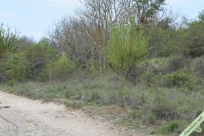 Autre exemple de milieu favorable, un chemin bordé de petits prunelliers à Optevoz (38)