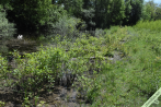 Un exemple de biotope dans lequel on peut rencontrer les chenilles du Citron ; ici le bord d'un lac où poussent Bourdaines et Nerpruns, entre une forêt de feuillus et une grande trouée sous une ligne électrique. Lac Dauphine, Bouvesse (38)